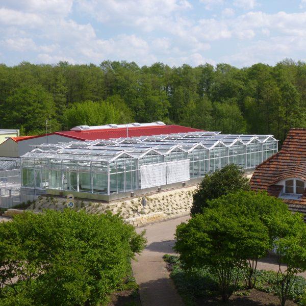 Leibniz-Institut für Gemüse- und Zierpflanzenbau IGZ Großbeeren/Erfurt e.V.